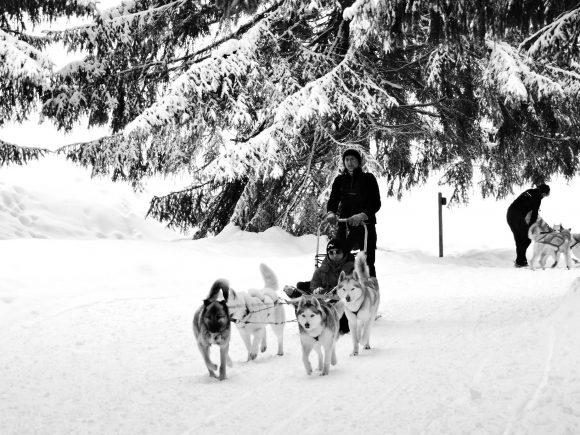 Balade chiens de traîneau dans le Grand Nord de Passy