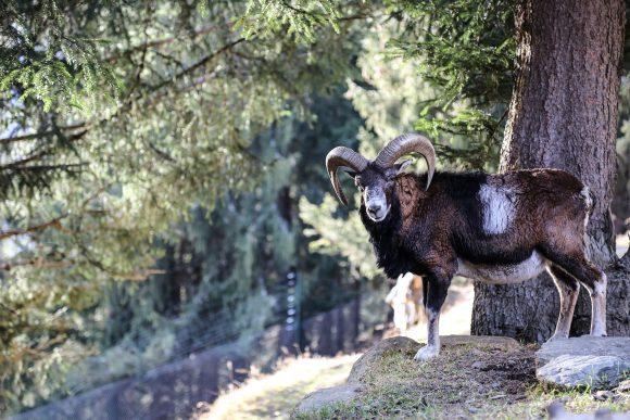 Parc animalier de Merlet