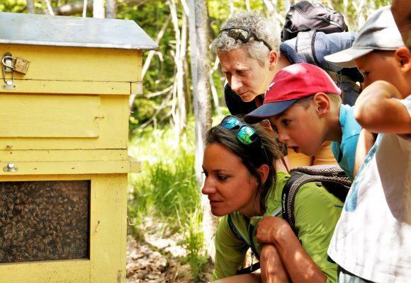 Les abeilles et autres pollinisateurs