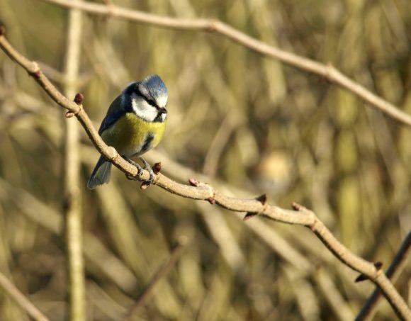 Atelier nature pour les oiseaux