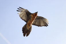 Découverte des oiseaux de montagne